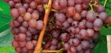 Le vin dans tous ses états sur vente-de-vin.com